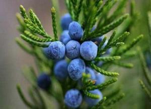 Растирка из лечебных растений