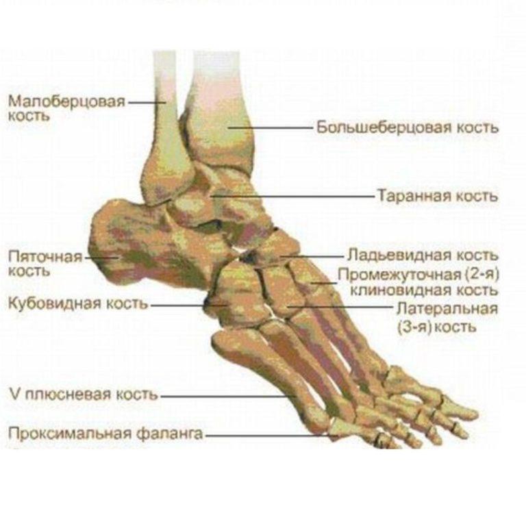 средства позволяют, больберцовой кости внизу ноги сохранить любимый
