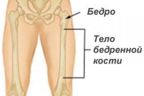 Самая длинная часть кости – ее тело