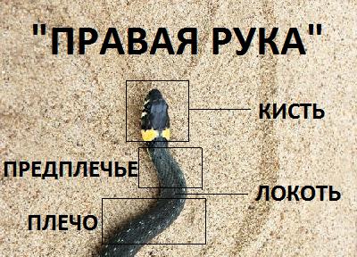 «Ползущая змея»