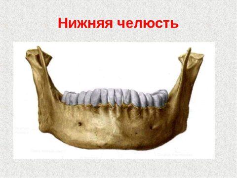 Наиболее часто травмируются костные ткани нижней челюсти.