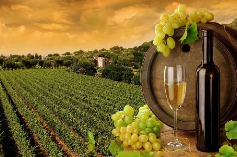 Натуральное вино – лекарство, если принимается правильно. © Гиппократ