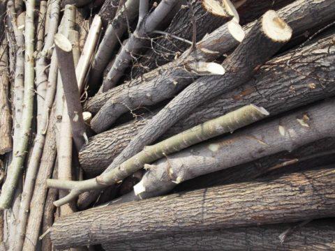Толстые деревянные ветви можно использовать для фиксации руки вместо деревянных планок.