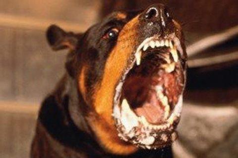 Агрессивное поведение животного – один из основных симптомов бешенства.