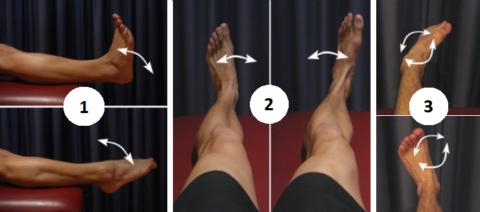 Движения 1 и 2 можно делать на вторые сутки после фиксации, а 3-е только через 2-3 недели
