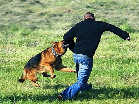 Лечение собачьих укусов рекомендуется проводить только под контролем специалиста.