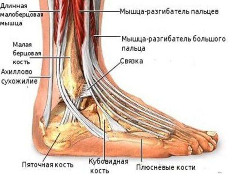 Растяжение или перелом голеностопа может быть связан с поражением различных анатомических образований, но клиническая картина не будет существенно отличаться