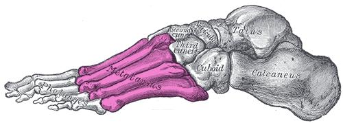 Sinus tarsi anatomy