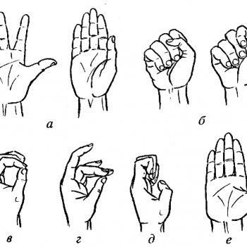 Упражнения для пальцев при переломе ключицы