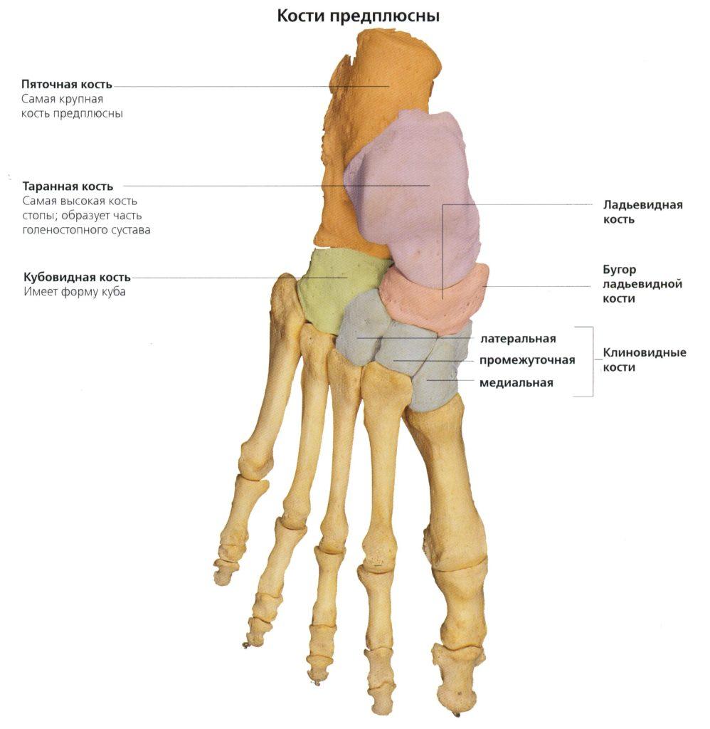 Последствия перелома клиновидной кости