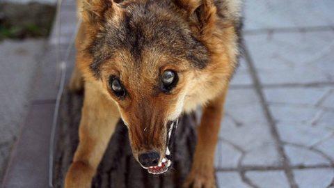 От укусов животных не застрахован никто