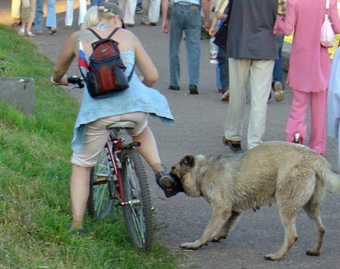 Провоцировать собак могут любые движения
