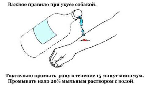 Укушенную рану необходимо вначале очистить.