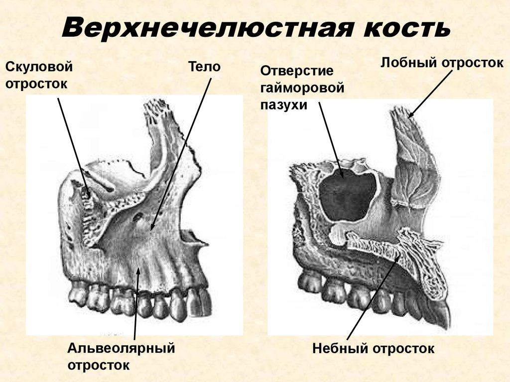 Перелом лицевой кости: первая помощь