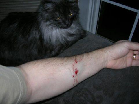 Иногда, вирусом бешенства можно заразиться при укусе даже от домашнего любимца, если он сам был ранее инфицирован больным животным.