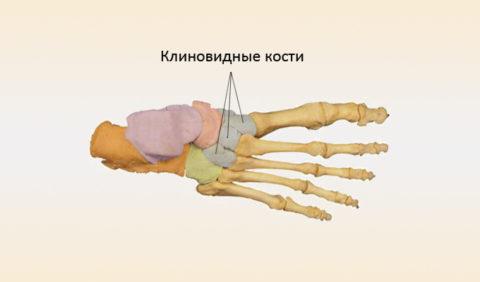Клиновидные кости.