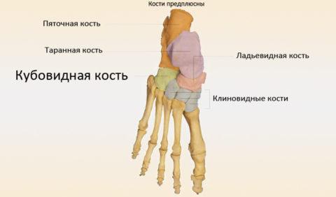 Кубовидная кость стопы.