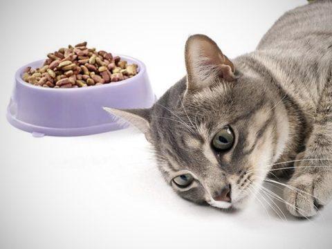 Больное животное отказывается от еды
