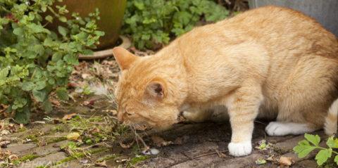 Если животное начинает употреблять несъедобные предметы, то это свидетельствует о серьезном недуге