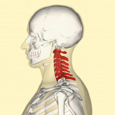 Фото: анатомические характеристики травмы шейного отдела позвоночника