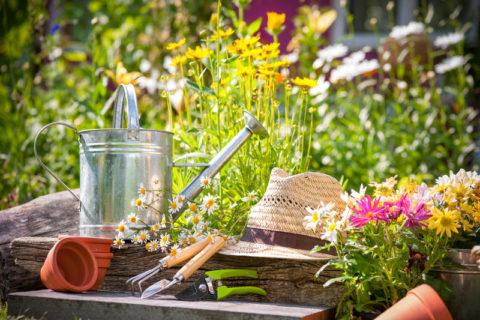 Уход за садовым участком стоит перенести на вечернее время.