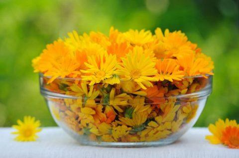 На фото цветы календулы