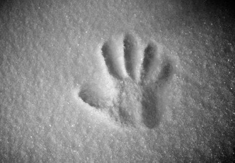 Отпечаток ладони на снегу