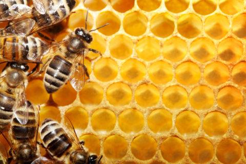 Пчелиный яд – одно из самых эффективных средств для снятия боли и дискомфорта.