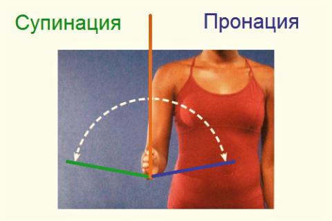 При пронации-супинации предплечья происходит пассивное сокращение мышц плеча