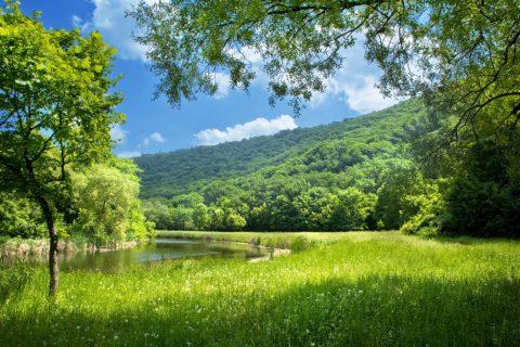 Природа летом не только красива, но и опасна.