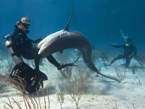 Акула напала на дайвера