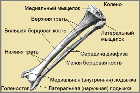 Код МКБ зависит от локализации травмы в берцовых костях
