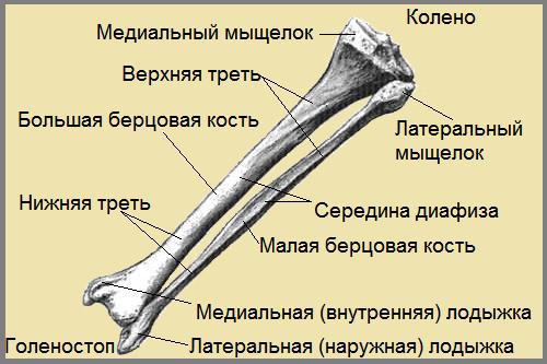 перелом костей голени код мкб