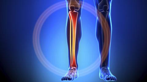 Особенности предоставления первой медицинской помощи при травме берцовой кости человека