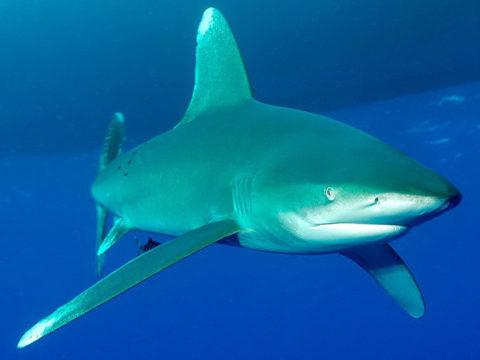 Суп из акульих плавников – особый деликатес