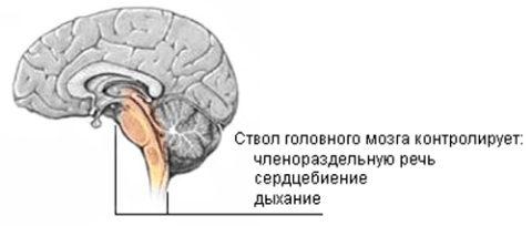 Важнейший отдел головного мозга