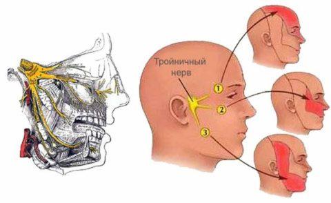 Точки выхода тройничного нерва на лице и зоны иннервации