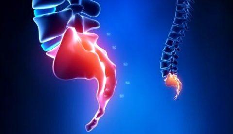 Анатомические особенности копчика в человеческом организме
