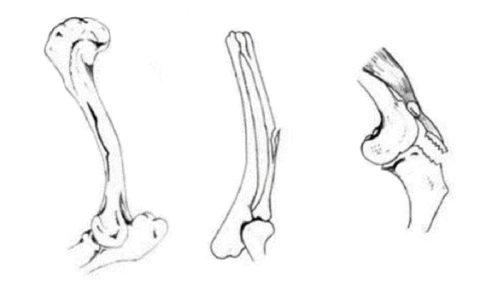 Возрастная предрасположенность к возникновению поднадкостничного перелома костей