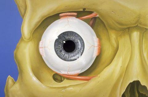 Анатомическая структура глазницы