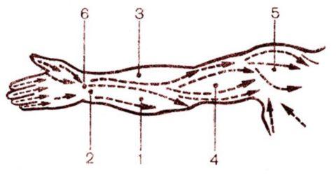 Массажные линии на руках и точки Шиа-цу – 1-6