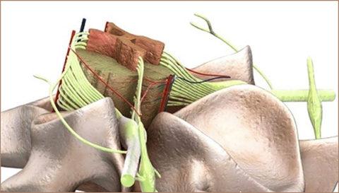 Спинной мозг и его травмы