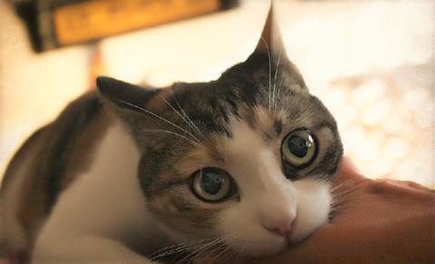 Несмотря на то, что кошек больше, чем собак, кусаются они в 7 раз реже
