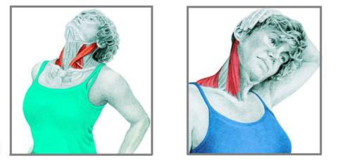 Изометрия для мышц шеи поможет восстановить работу вестибулярного аппарата