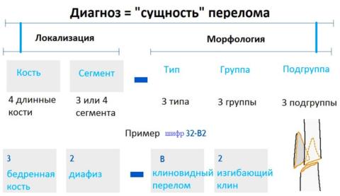 Принцип постановки диагноза с помощью классификации по Мюллеру