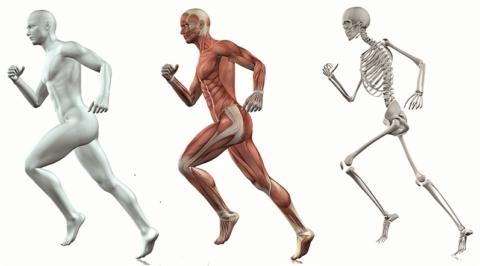 Скелет человека состоит из 206 костей, каждая из которых может сломаться